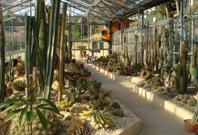 Il giardino sottovico la cattedrale delle piante grasse for Serra piante grasse