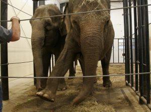 Stop circo con animali