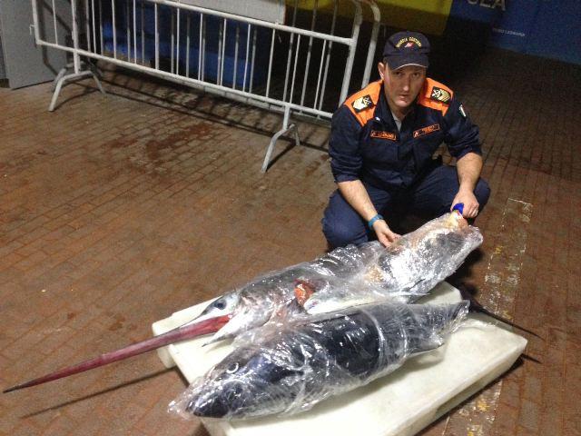 Una parte del pesce sequestrato (foto Capitaneria di porto di Livorno)