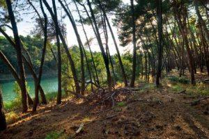 Le sponde del Fiume Morto (archivio Parco di San Rossore)
