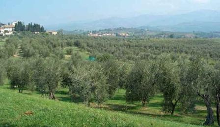 Fiesole_nasce biodistretto