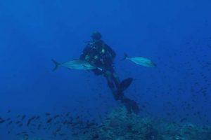 Bando guide parco subacquee