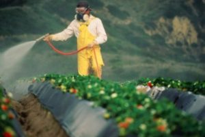 Vivaismo e veleni chimici
