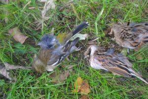 Fauna protetta sequestrata (Foto WWF)
