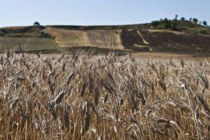 agricoltura-sostenibile-ambiente-toscana
