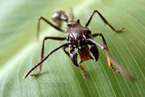 insetti-robot-automi-pisa-toscana