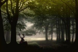 Valter Segnan, Il cervo nella nebbia. Foto vincitrice del IV concorso fotografico papianino