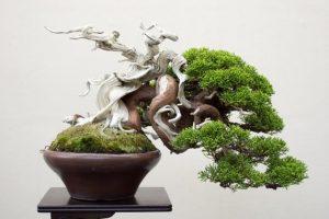 shohin-bonsai-3