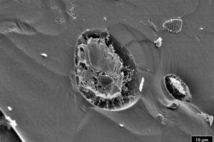 """Olio di oliva extravergine """"velato"""": dettaglio delle microgocce di acqua disperse nella fase grassa. (Foto di A. Minnocci da www.santannapisa.it)."""