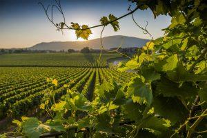 vitigni-toscana-ambiente