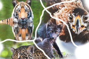Locandina_Wildlife_Museo_di_Storia_Naturale