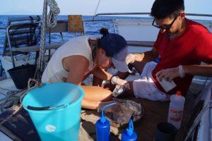 I ricercatori al lavoro (foto Legambiente - ExpeditionMED)