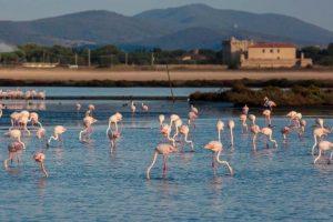 L'oasi WWF Laguna di Orbetello (foto di Fabio Cianchi)