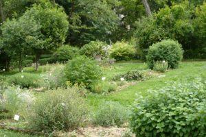 giardino dei semplici