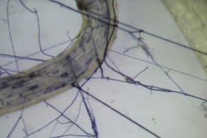 Il Wood Wide Web (Foto da Università di Pisa).