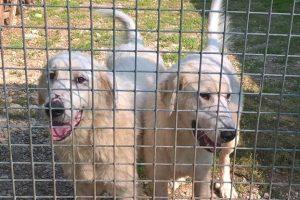 Lillo e Lollo nel canile Una di Poggibonsi (foto Comune di Greve in Chianti)