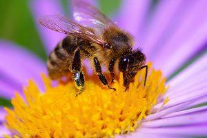 rivoluzione-api-carmignano-toscana-ambiente
