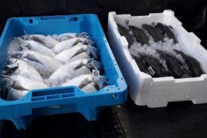 Unicoop Tirreno_nuovi imballaggi per il pesce