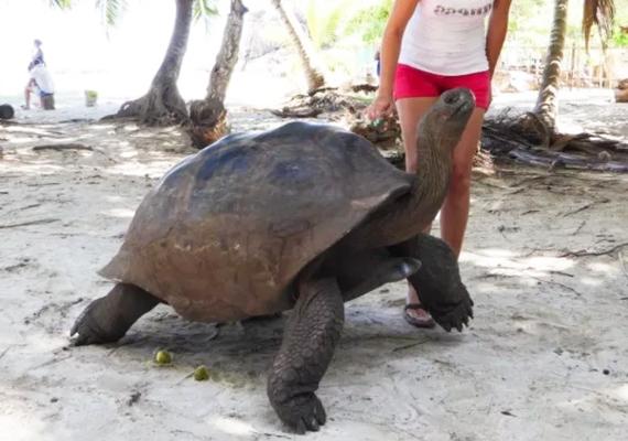 tartarughe-giganti-toscana-ambiente