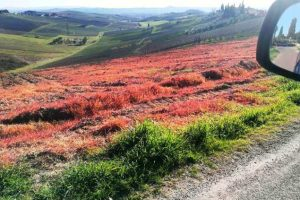 Foto dalla pagina Facebook del Bio-Distretto del Montalbano
