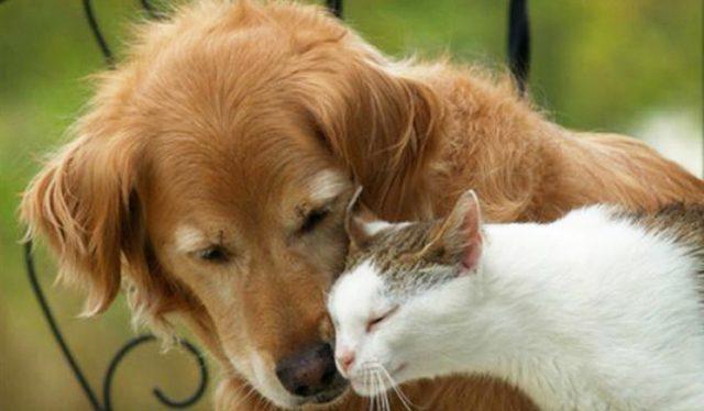 animali-cani-gatti-toscana-ambiente