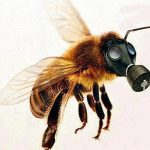 ape con maschera