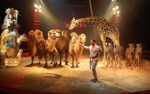 circo-orfei-animali