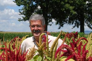 Paolo Casini, il docente di Agronomia che ha coordinato gli studi sulla pianta.