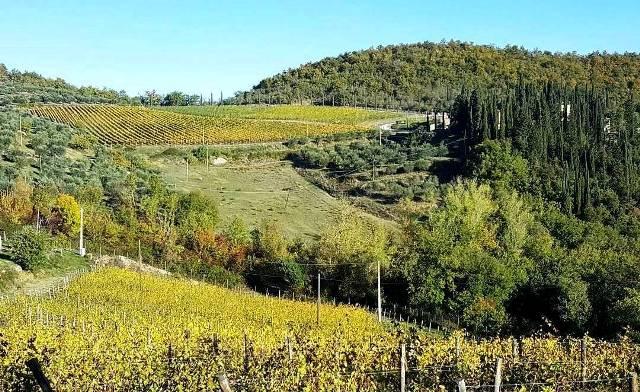 Biodistretto Chianti