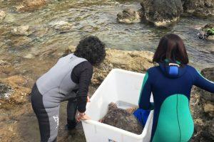 16 aprile: le operatrici del centro Tartanet liberano la tartaruga Olivastra