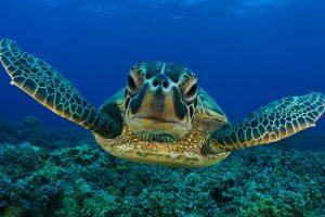 caretta-caretta-tartarughe-marine-Toscana-ambiente