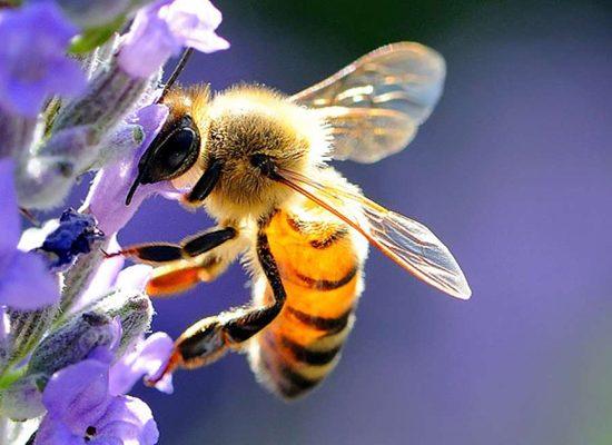 api-lunigiana-toscana-ambiente