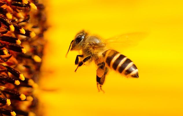 api-maremma-toscana-ambiente