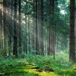 foreste-Toscana-ambiente