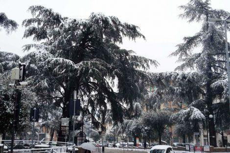 Inverno 2017: i cedri di piazza Mazzini