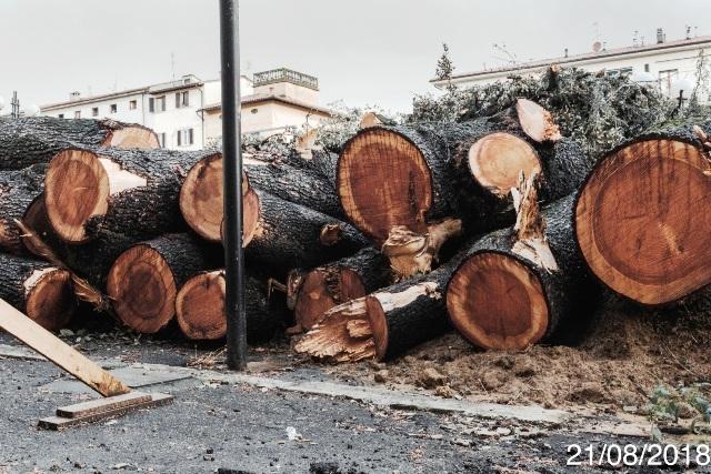 Poggibonsi, piazza Mazzini: tronchi dei cedri del Libano (pellet)