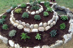 Spirale di erbe aromatiche
