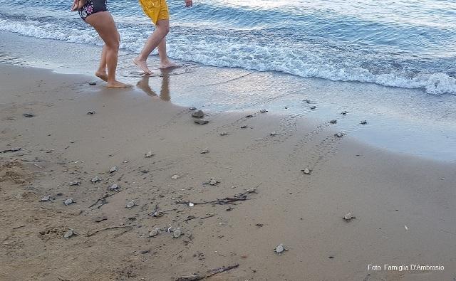 Nascita delle tartarughine a Straccoligno nel 2018 (foto famiglia D'Ambrosio)
