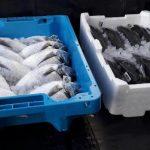 Unicoop-Tirreno_nuovi-imballaggi-per-il-pesce