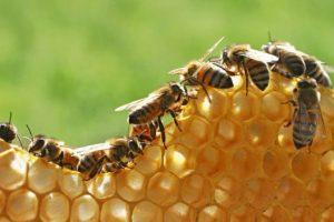api-bio-insetticidi-toscana-ambiente