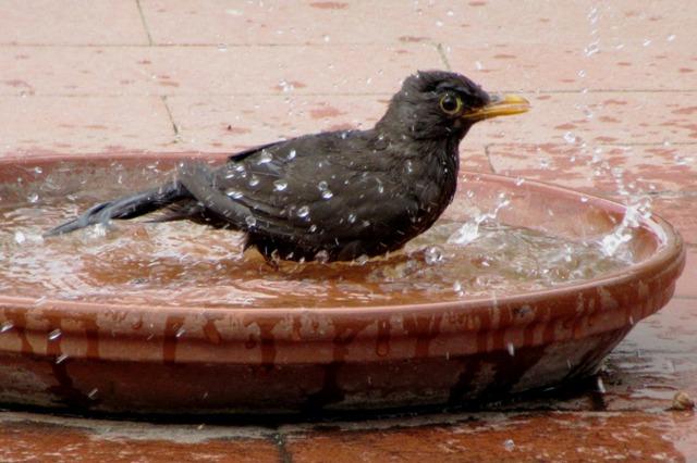 Fontana_uccellino