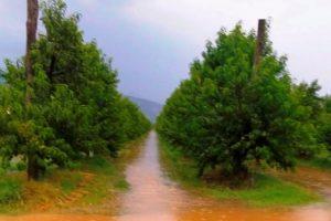 Un frutteto allagato (foto Coldiretti Arezzo)