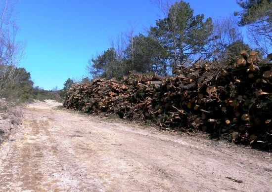 Tagli boschivi al Belagaio, nella riserva del Farma (foto da Wwf Siena)