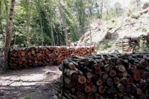 Taglio alberi_1
