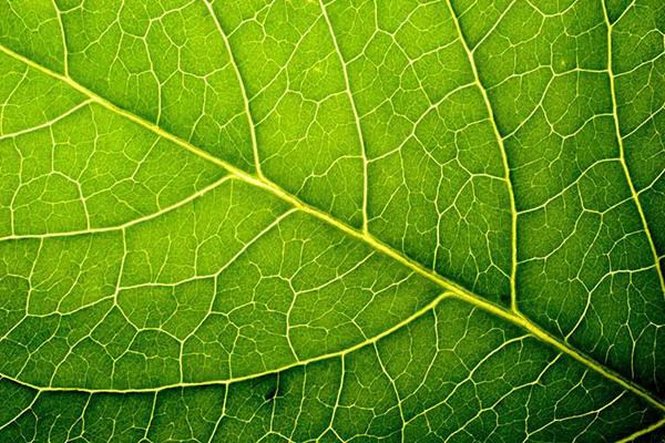 piante-ossigeno-toscana-ambiente