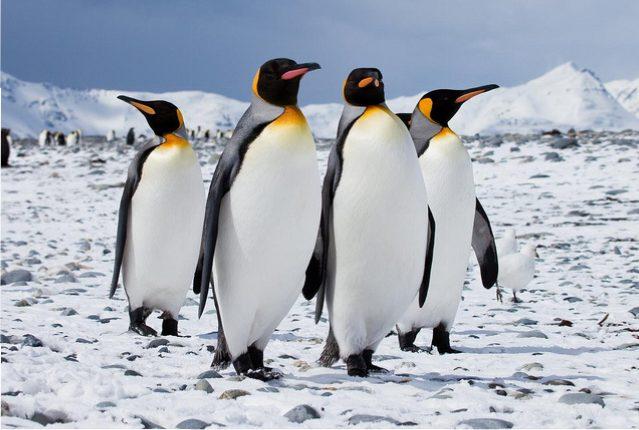 pinguini-siena-toscana-ambiente