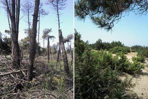 A sinistra la situazione attuale, a destra l'obiettivo dopo i lavori. (Foto da Parco MSRM).