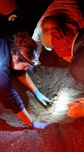 Foto WWF Livorno