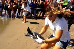 La dottoressa Luana Papetti libera Nausicaa (foto tartAmare)