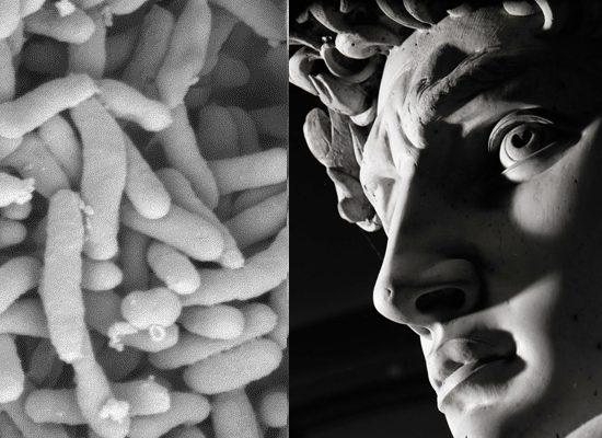 batteri-arte-toscana-ambiente